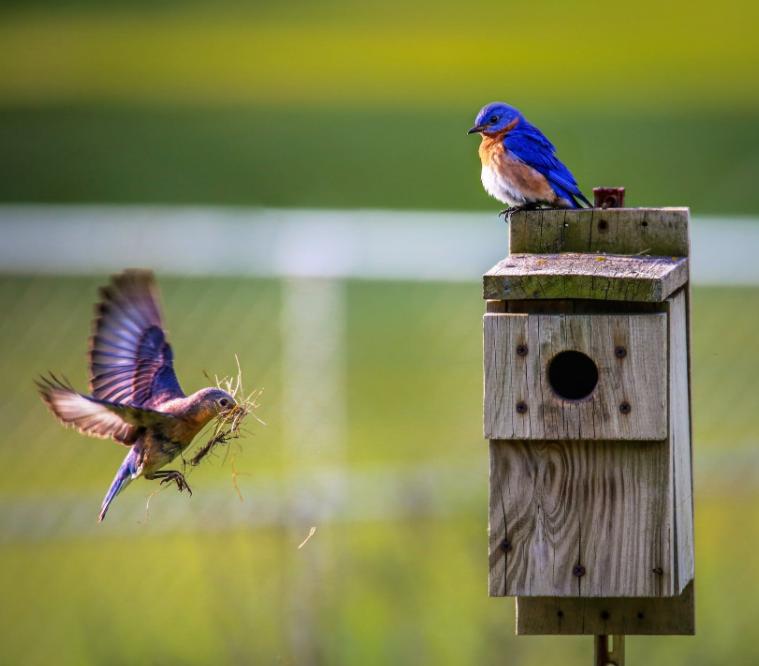 Wildvögel etwas unter die Arme greifen mit Vogelfutter